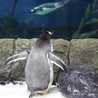 $36.8(原价$46) 看呆萌小企鹅SEA LIFE 悉尼水族馆门票团购 周末好去处