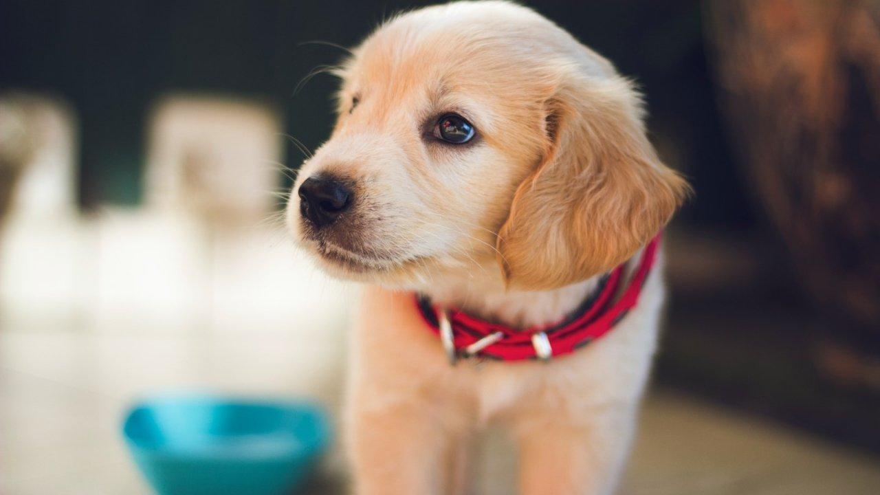 养狗最全攻略   在美国如何领养狗狗?如何训练狗狗上WC?狗粮、玩具、营养品如何选购?