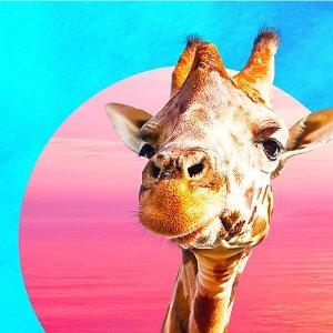 一起去看动物大迁徙肯尼亚往返机票+酒店7晚住宿+吃住全包 只要1185欧