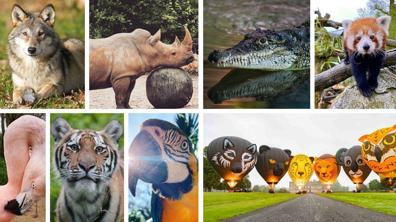 英国旅游| 英国最大野生动物王国Longleat游玩全攻略!一起去感受大自然吧~