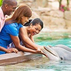 $91.99 另有买1天赠1天门票$81.99起SeaWorld 圣地亚哥海洋世界 成人购票儿童免费
