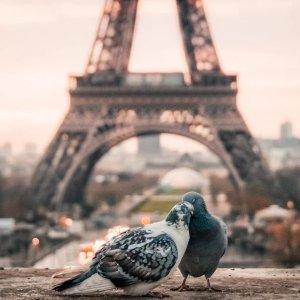 As low as $462 on One World AllianceDallas to Paris France Round-trip Airfare Saving