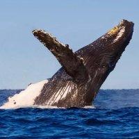 3小时观鲸之旅