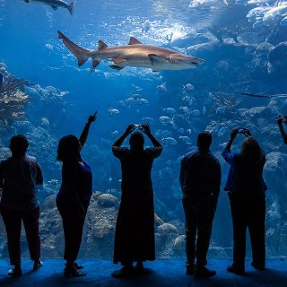 $22起  集娱乐休闲与科普教育一体美国 佛州水族馆门票 The Florida Aquarium