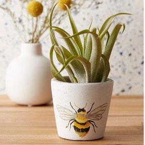 小蜜蜂花盆