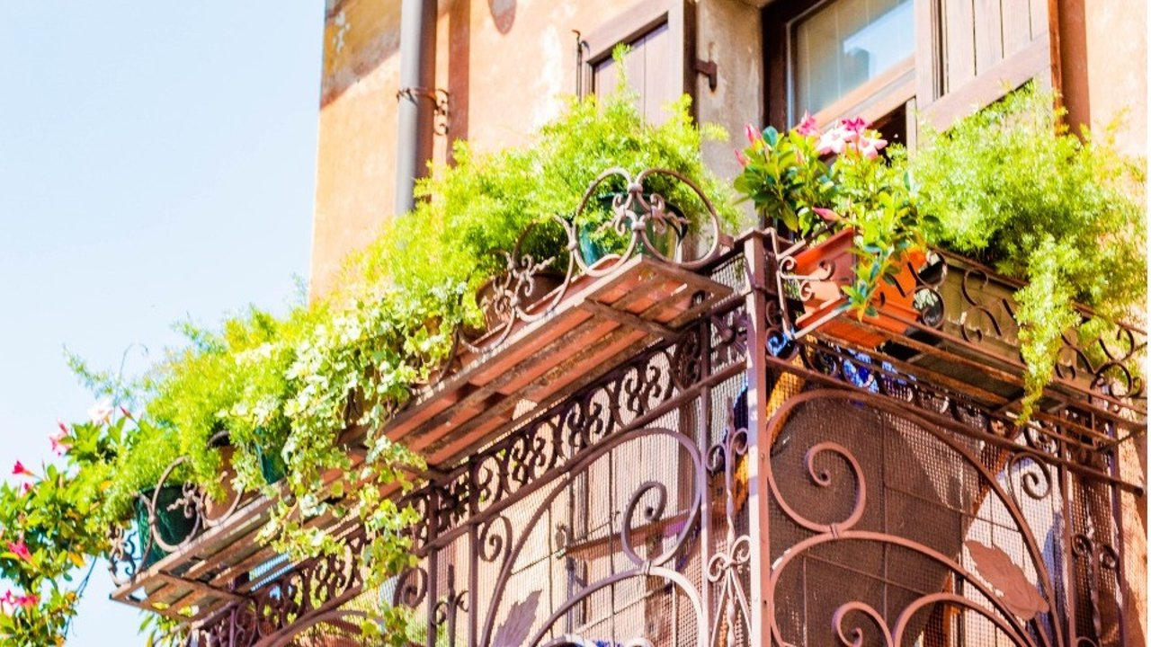 法国常见花种推荐!春天到了,自己种些漂亮的花花装饰阳台吧~