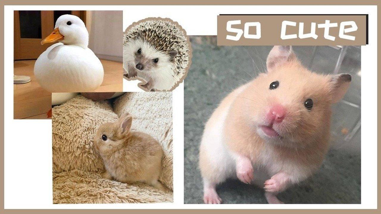 除了猫和狗,还有这些好养干净又亲人的家养小型宠物,萌到心坎里等你带回家!
