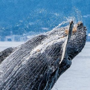 From  $35Up to 24% Off Whale Watching at Sea Goddess Whale Watching Discount
