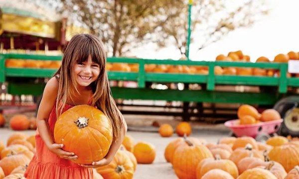 洛杉矶Pasadena Pumpkin Patch门票/2人