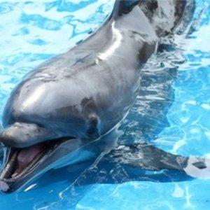 超低折扣价圣地亚哥海洋世界单日折扣门票
