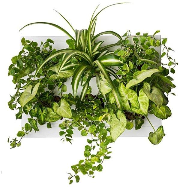 壁挂式植物花槽