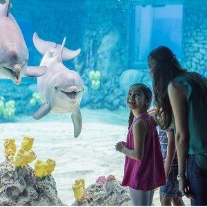 As low as $49.99Single-Day Ticket to SeaWorld San Antonio