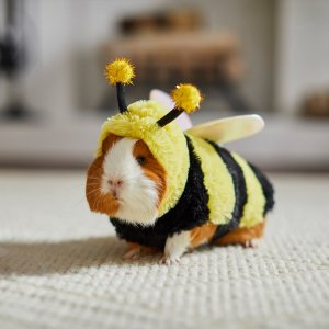 FRISCO Bumble Guinea Pig Costume, One Size - Chewy.com