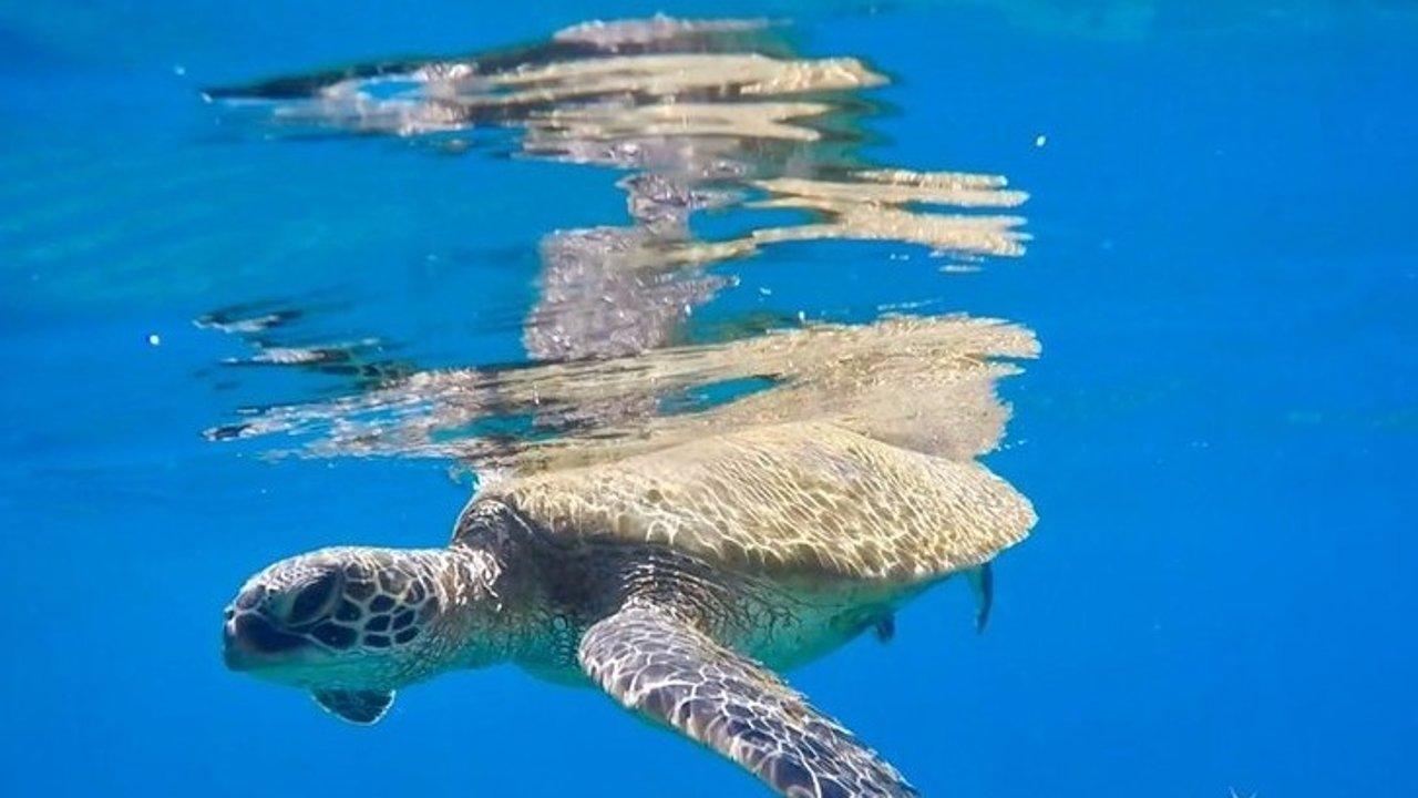 夏威夷Maui岛浮潜攻略