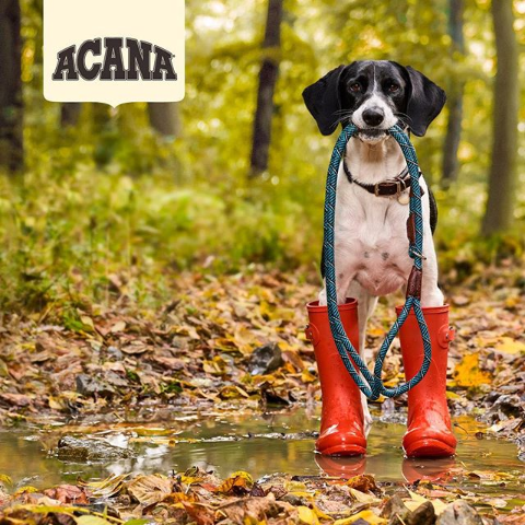 Up to $30 OffAcana Dog Food on Sale