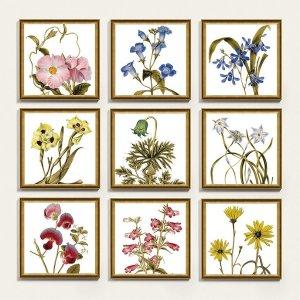 Botanica Framed Art Print Series