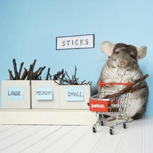 Petco 小型动物热卖 养只萌萌哒小东西