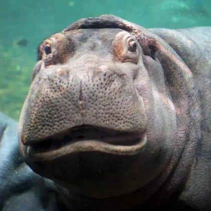 肯顿水族馆 单人儿童会员