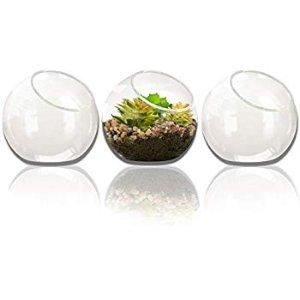 Amazon.com: NeutralPure ECO Tabletop Glass Plant Terrarium (3 Pcs): Gateway