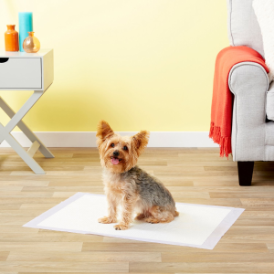 Buy 3+ Save 15%All Kind Dog Training Pads, Wraps, and Diapers on Sale