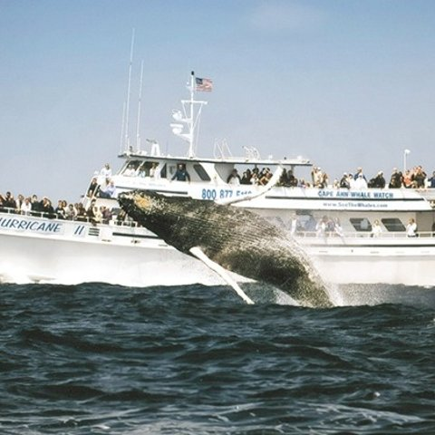 Starting from $26.35Boston Four-Hour Whale-Watching Cruise for One