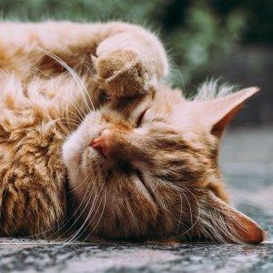 低至6折 + 额外8折Petco 精选猫咪舒适小屋促销