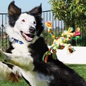 Up to 40% OffPetco Dog Fetch Toys
