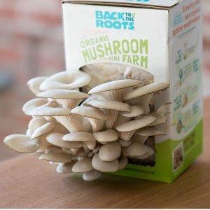 $12.99Back to the Roots 回归本源 纯天然有机蘑菇农场