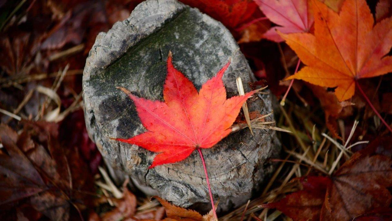初到加拿大要办理哪些证件?工卡SIN、医保卡、银行卡、驾照申请攻略
