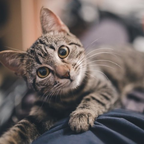 Up to 41% OffPetco Cat Vitamins & Supplements on Sale