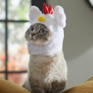 $3起 小鸡帽子$4.5折扣升级:Chewy 万圣节宠物用品低至4折,狗狗礼盒$14.66