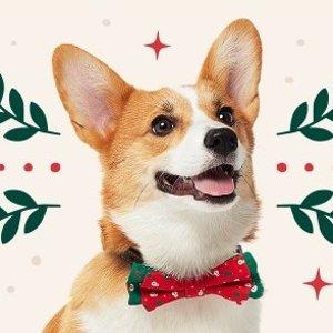Chewy 宠物圣诞节专场 为爱宠淘圣诞礼物