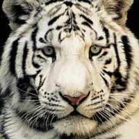 米拉吉酒店动物保护区