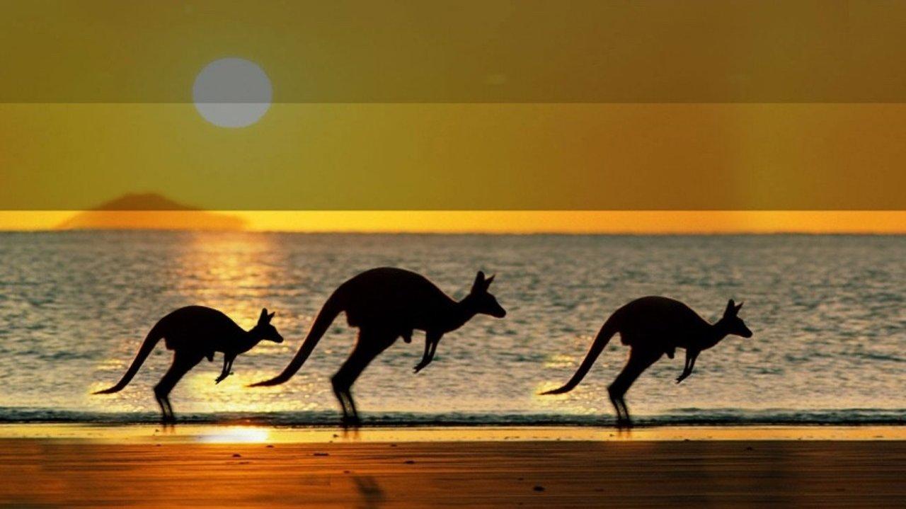 澳币都跌成这样了,你还不来? | 走遍澳洲小贴士