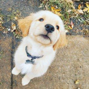 新用户注册立得$10Rover Petcare 回国宠物寄养/托管/监护等服务 萌宠界的Airbnb