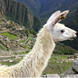 Fom $1999Air & 10-Day Small Group Tour of Amazing Peru