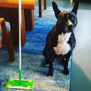 Tips Vacuums & Floorcare
