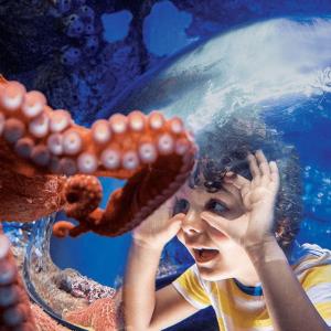 $76.99起限今天:加州圣地亚哥 Sea World 海洋世界 任意天门票