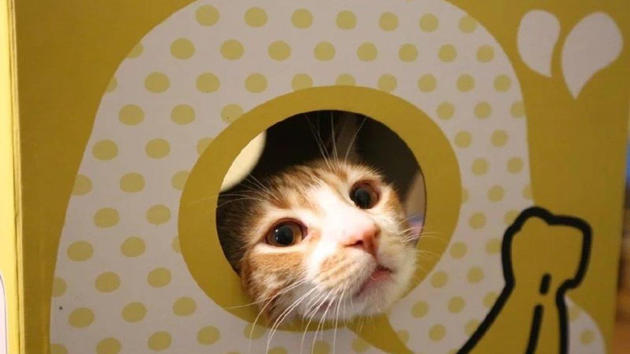 浅谈:如何培养出一只更健康更美丽的猫咪