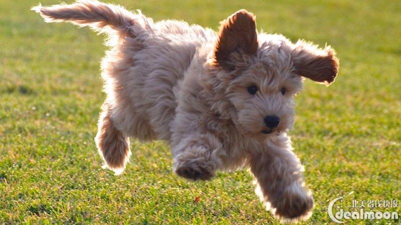 你适合养什么狗?不同品种狗狗性格、特点大揭秘