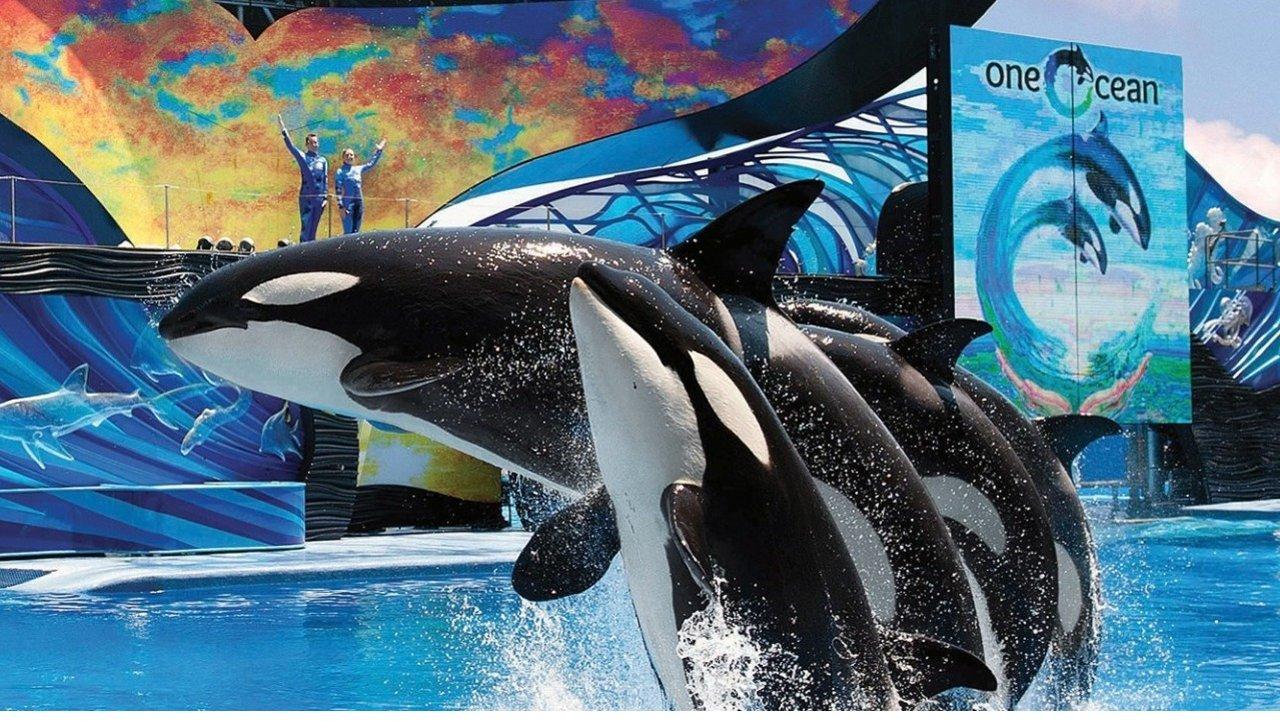 圣地亚哥海洋公园Sea World游玩攻略,便宜门票、路线、必看玩点一样都不错过!