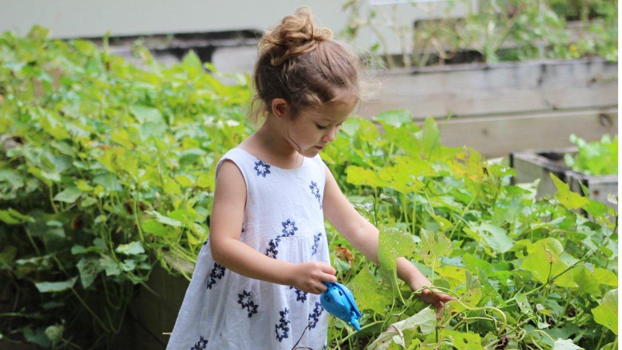 加拿大自家花园打理必知手册   规划种菜栽花的风水,了解除草砍树法规~
