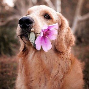 低至6折 + 满$85享额外8折Petco 精选狗狗玩具促销 低至$0.79