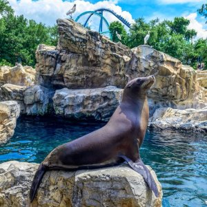 低至5折,单日票$56.99SeaWorld 奥兰多海洋世界门票促销 夏季亲子出游
