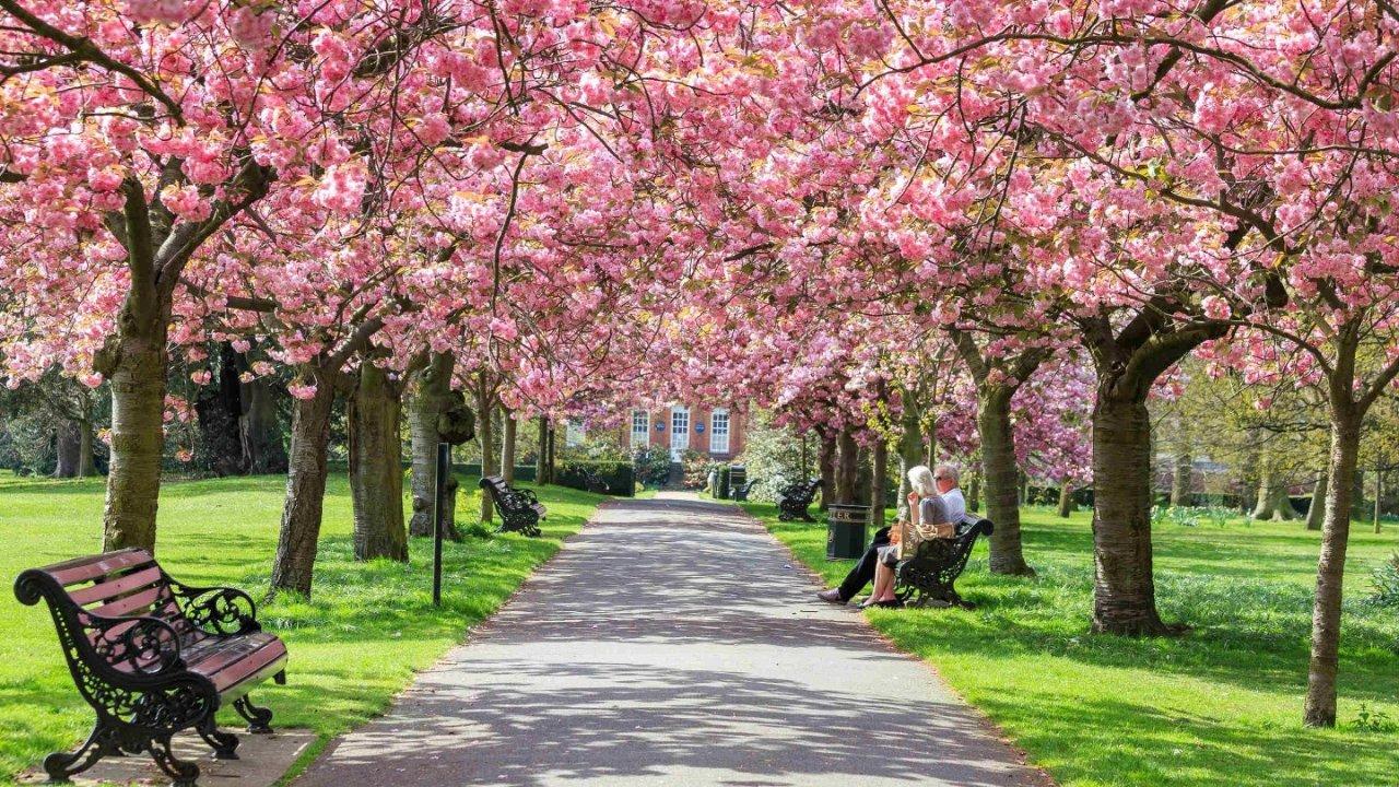 英国樱花季2021   英国赏樱花地点有哪些?9大英国赏樱圣地打卡指南
