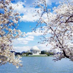 仅$75/晚起+额外9折折扣升级:华盛顿DC 樱花节期间4星级酒店好价