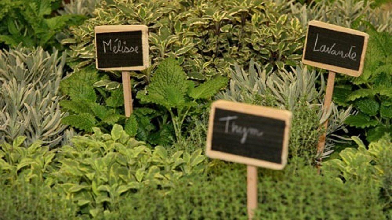 法国夏季常见香料的养殖方法和用途大全!