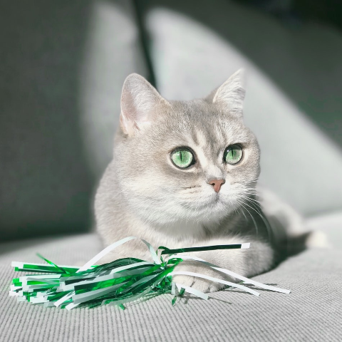 Up to 50% OffPetco Cat Teasers & Wands on Sale