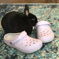 Crocs 洞洞鞋反季热促 超多款任选