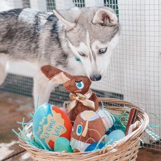 BarkBox 订阅宠物惊喜盲盒 免费送玩具BarkBox 订阅宠物惊喜盲盒 免费送玩具